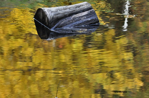 This is a piece of cut wood that floated down the creek in the storm of June 12-13, 2008. I've not moved it. Today it is the central theme to four photos at the creek. The piece of wood is in each. All were shot today. This one was in the morning.