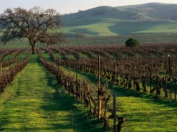 10 Great Wineries In Livermore Valley, California.