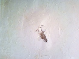 Plaster that has bubbled and cracked due to damp