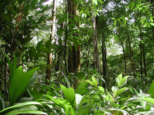 Photo credit Corcovado Trail : rainforest under canopy - memphite.com