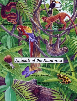 Endangered Animals in the Rainforest.