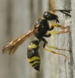 You don't need dangerous chemicals to kill wasps and bees.