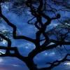 samidaud profile image