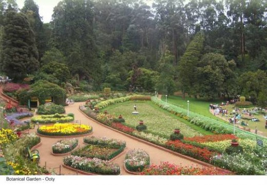 A view of Botonical garden, Ooty