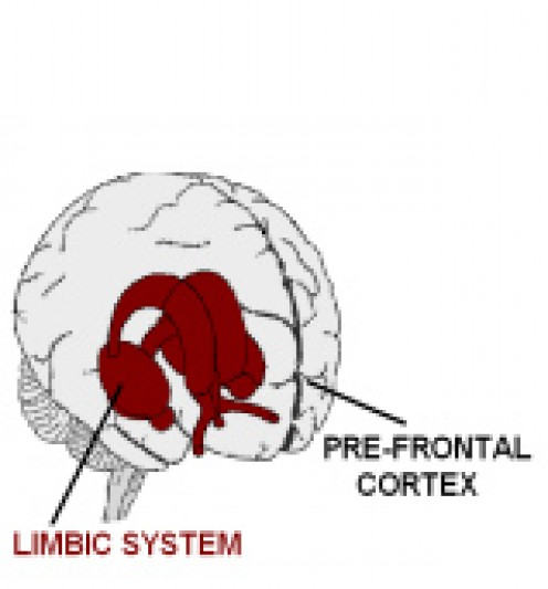 The two part brain: Pre-frontal cortex; Limbic system