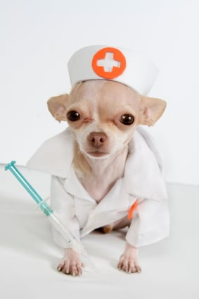 Regular visits to the vet keep your dog healthy and happy!