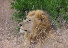 ehow-facts-5155491-african-safari-vacation