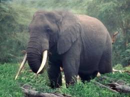 safari- for-less