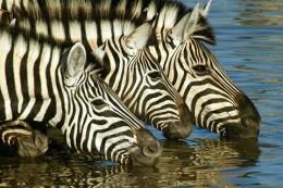 african-travel-guide-wordpress