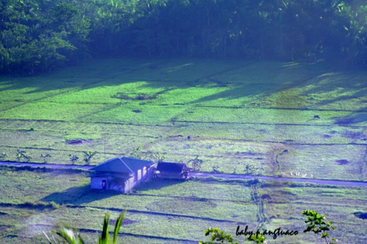 A farm at the break of dawn, early morning light