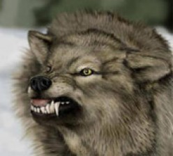 The Difference between a Wolf and a Dog - The Hybrid Wolf - Are dogs and Wolfs the Same