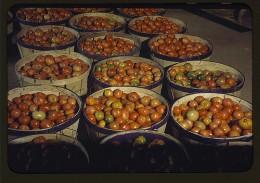 Genetically engineered fruit?
