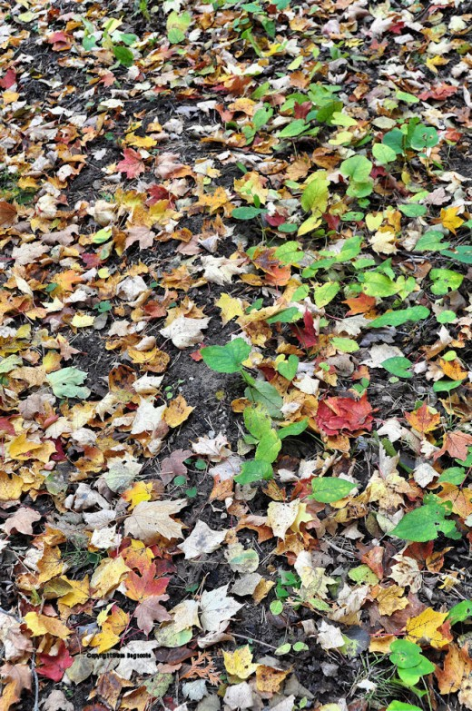 The woods floor is as wildly colored as the biblical Joseph's many colored coat