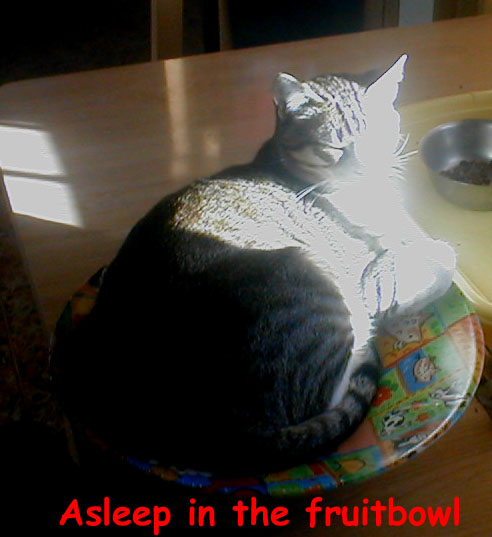 In the glare of the afternoon Spanish sun, Chaussettes sleeps in the fuitbowl