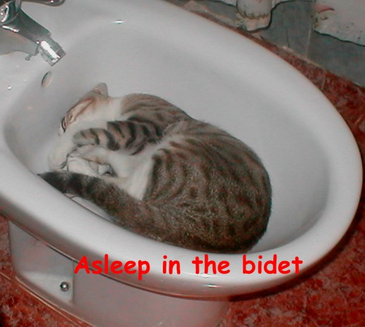 A very Spanish cat, he loved the bidet