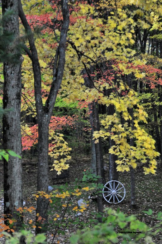 A wagon wheel from Grandpa Charlie's old farm in Lenawee county adds a bucolic touch to this autumn scene.