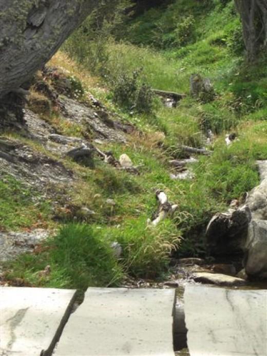 Tierra del Fueggo National Park