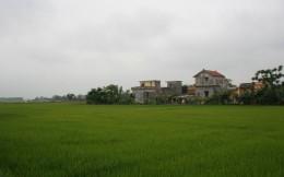 Ninh Binh Vietnam rice paddies