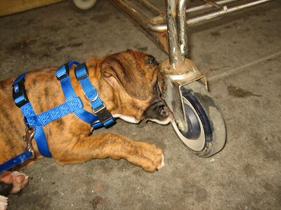 Dog attacks are the prime cause of broken cart wheels.
