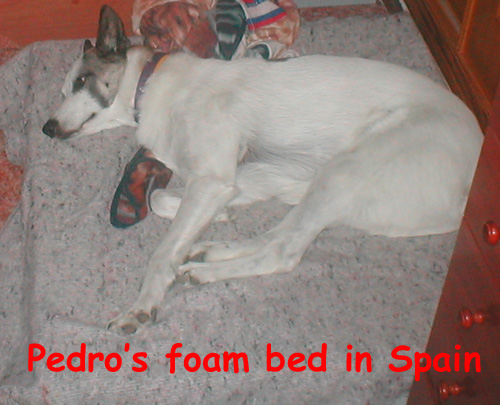 I made him his own foam dog bed with lots of stretching space, warmth and softness against the ceramic tile floor in Spain