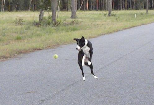 High jump to catch a tennis ball