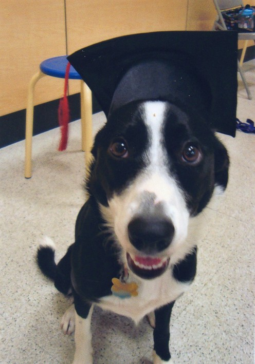 Graduation from pet training