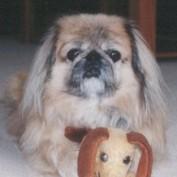 dogsdogsdogs profile image