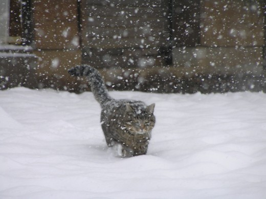 A wave, a particle and a cat in the snow.