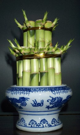 Feng Shui  Bamboo plants