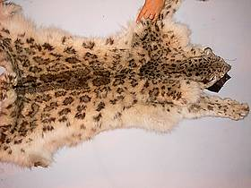 Snow leopard pelt