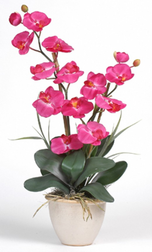 Silk Orchid Flowers and plants from QualitySilkPlants.com