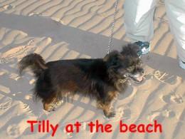 Tilly's first walk on the beach