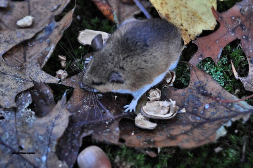 The older mouse was lethargic and didn't move hardly at all.