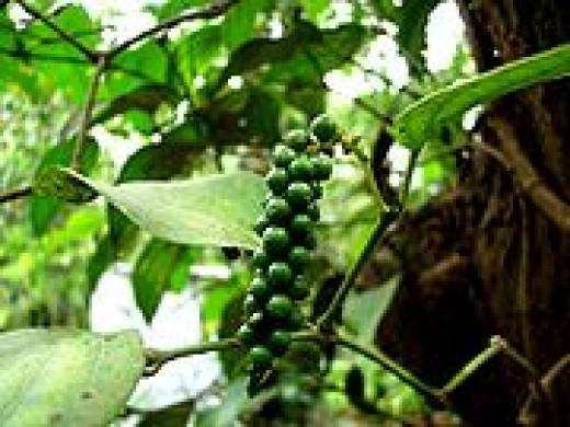 Unripe Peppercorns
