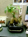 A Potted Plant Home Decoration