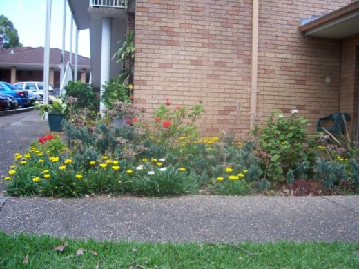 "A mix of ""daisies"" which acts as a ground cover, with some other clumping plants"