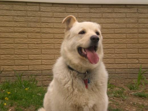 Our dog Ralphie.