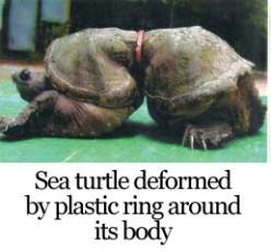 Help Save Animals