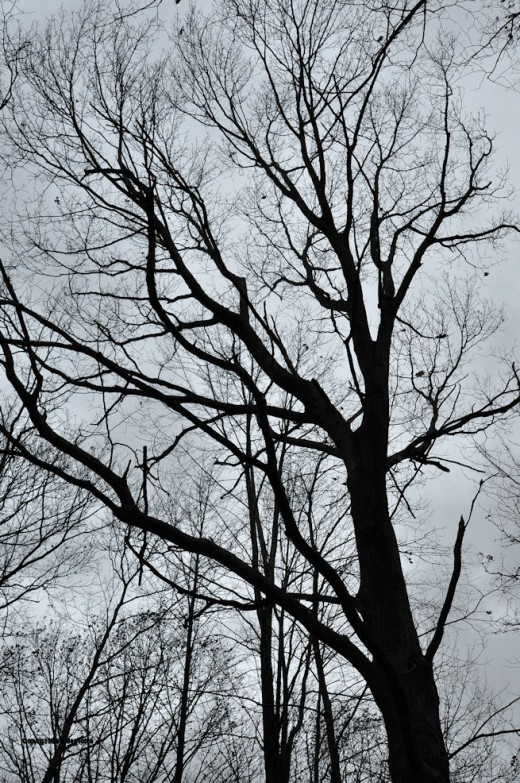 How fast it can change. A day of wind at this time of year has stripped most trees of their leaves. The colorful canopy of recent weeks is now a clattering mass of empty limbs and branches.