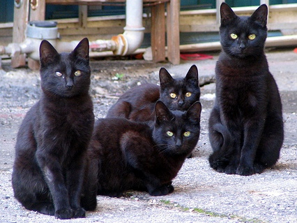 For some unknown reason black cats have lower levels of allergen producing dander making them the safer allergy free pet.