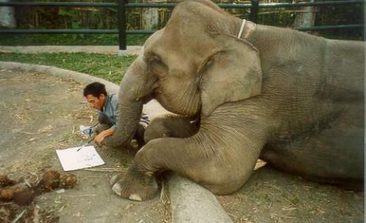 Asian elephant gets art lesson.
