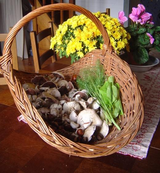 So many wild mushrooms