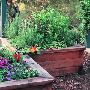 Eight Herbs for Your Perennial Herb Garden | Dengarden on perennial garden plans zone 7, cottage gardens landscape design, perennial shade garden design, perennial garden layout design, perennial bulb garden design, perennial flower garden design plans, perennial garden plans zone 5, perennial garden plants,