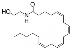Anandamide - The Neurotransmitter of Forgetting