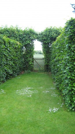 a simple wooden gate set into a clipped hedge. Not as dramatic as some gates but the interest in this comes from the perspective that the hedge provides