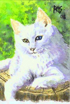 My novel's protagonists are cats. Picture this cat black rather than white and you have one of them when he grows up. Norwegian Forest Cat ACEO by Robert A. Sloan