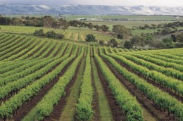 Barossa Valley home of some great Australian Wines