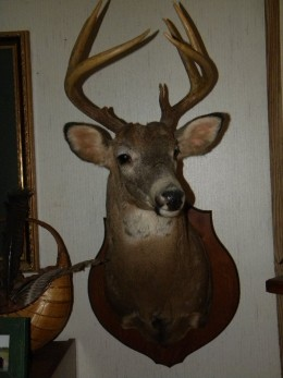 another ground hunting blind trophy buck