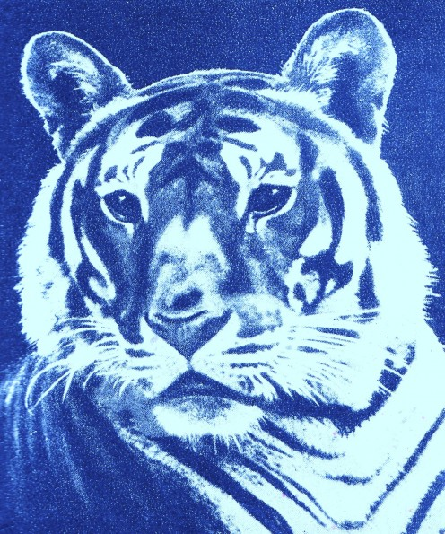 The Fierce Tiger of India ~ Art by Jerilee Wei