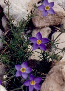 Flowers seen along the way...